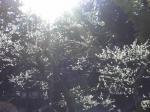 光が差し込み…梅が咲く。