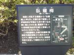 臥龍梅という、政宗が植えさせた梅だそうな。ちなみにここの隣には資料館もあって、公の土葬について及び副葬品などが展示されています。