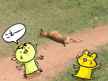 カンボジア(犬)のコピー1