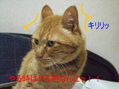 2008_0920H20007220008.jpg