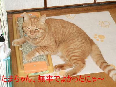 2008_10110001.jpg