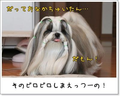 2010_1029_074721AA.jpg