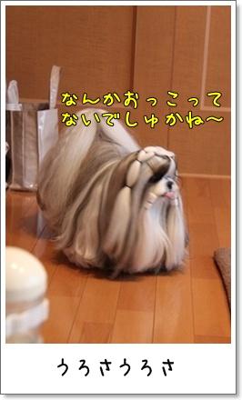 2010_1101_075009AA.jpg