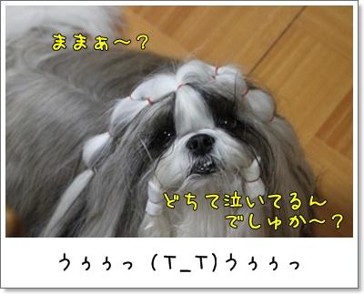 2010_1108_200313AA.jpg