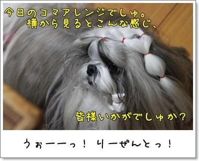 2010_1108_200320AA.jpg