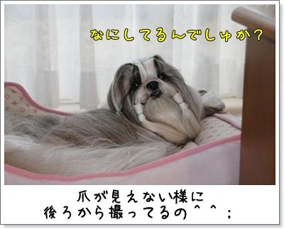 2010_1109_075227AA.jpg