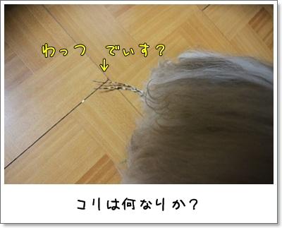 2010_1110_193331AA.jpg