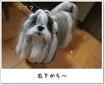 2010_1110_193348AA.jpg