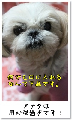 2010_1110_193805AA.jpg