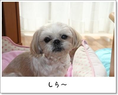 2010_1114_120036AA.jpg