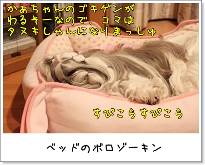 2010_1120_182759AA.jpg