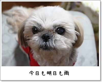 2010_1122_193110AA.jpg