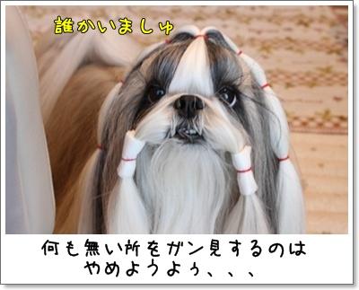 2010_1124_074137AA.jpg