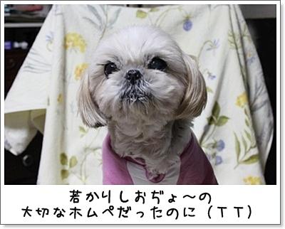 2010_1124_193433AA.jpg
