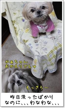 2010_1124_194026AA.jpg