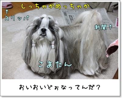 2010_1126_193526AA.jpg