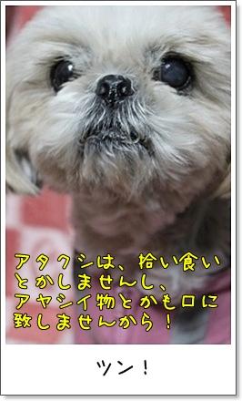 2010_1126_193709AA.jpg