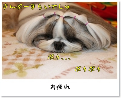 2010_1127_160115AA.jpg