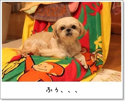 2010_1127_170518AA.jpg