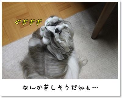 2010_1202_194408AA.jpg