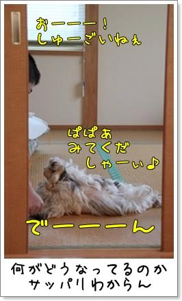 2010_1204_074045AA.jpg