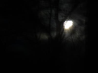 小石川の満月
