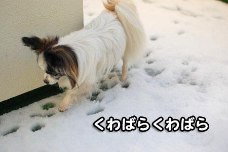 ベランダの雪05