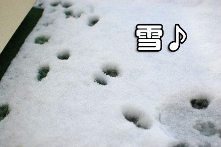 ベランダの雪01