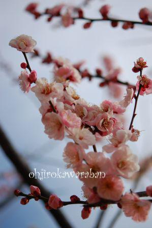 梅とおうじろう♪_003