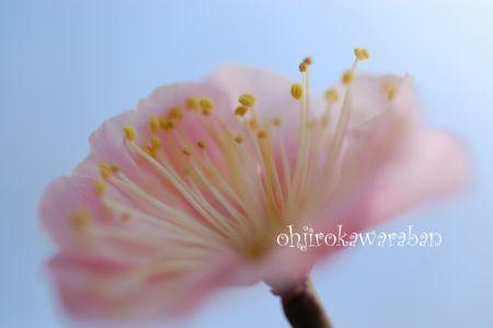 梅とおうじろう♪_002