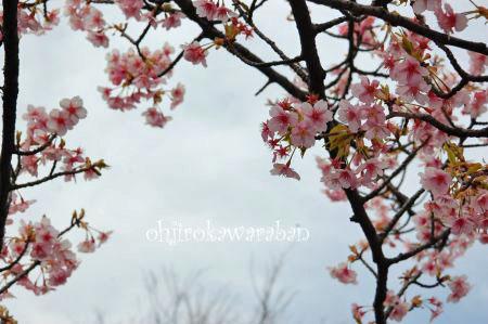 桜も咲いてたよ♪_005