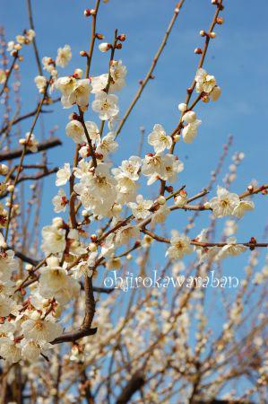 桜も咲いてたよ♪_002