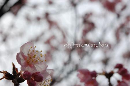桜も咲いてたよ♪_008