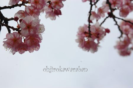 桜も咲いてたよ♪_007