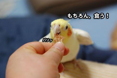 仲良し兄弟♪_002