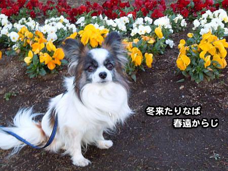 8花が咲きます_08