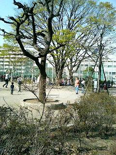 外国人の多い公園