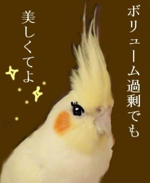 動画 031
