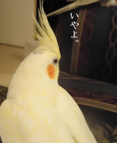 動画 039