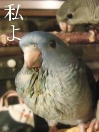 動画 278