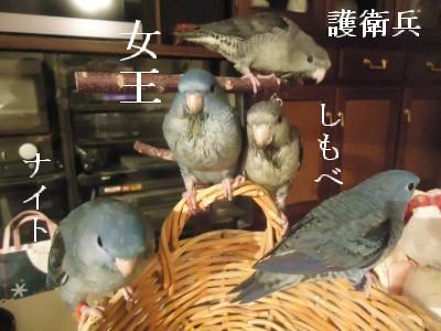 動画 276