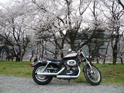 03・28桜01