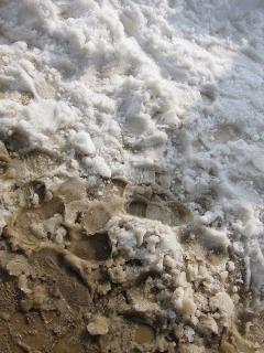 雪と遊ぼうin南公園