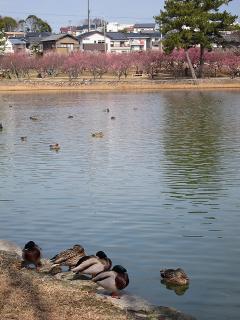 西三田ヶ入池