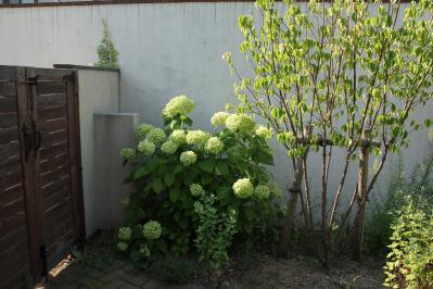 2011 8 garden