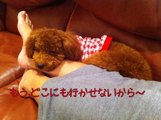 iphone_20110923211301.jpg