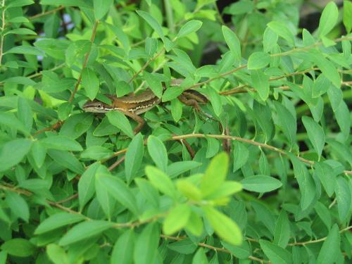 garden 001_convert_20080818154910