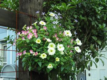 garden 004_convert_20080818163814