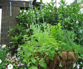 garden 005 2_convert_20080818165137