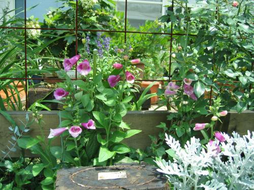 garden 003_convert_20080818165938